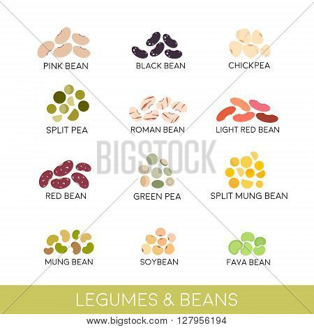 Beans and legumes Set. Vector illustration isolated on white