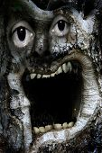 grotesque abstract face appearing in the trunk of an ancient tree for use in metaphorical or conceptual scenario. poster