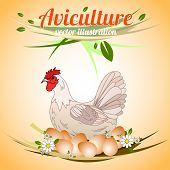 Hen with eggs. Poultry. Aviculture. Vector illustration. poster