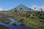 Mount Mayon Volcano in the province of Bicol, Philippines poster