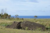 Rano Raraku. Abandoned and partially buried statue on the slopes of the extinct volcano which was the quarry from which the Moai statues of Rapa Nui (Easter Island) were carved. poster