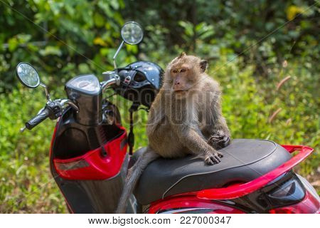 Monkey sitting on a motorbike. Tourism and travel in South-East Asia.
