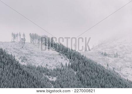Winter scenery. Landscape.