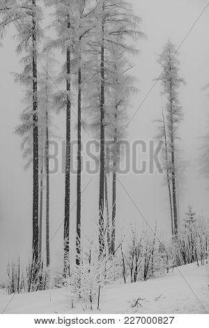 Amazing winter forest. Misty scenery.