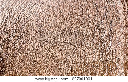 Hippopotamus Leather As A Background . Photo Of An Abstract Texture