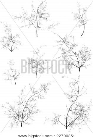 Some winter trees