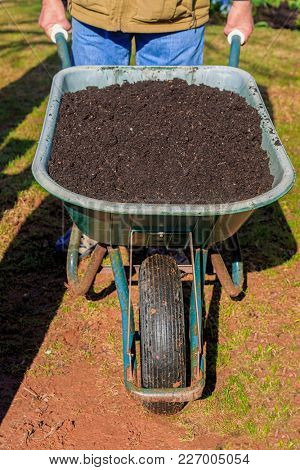 Man pushing wheelbarrow full of compost.