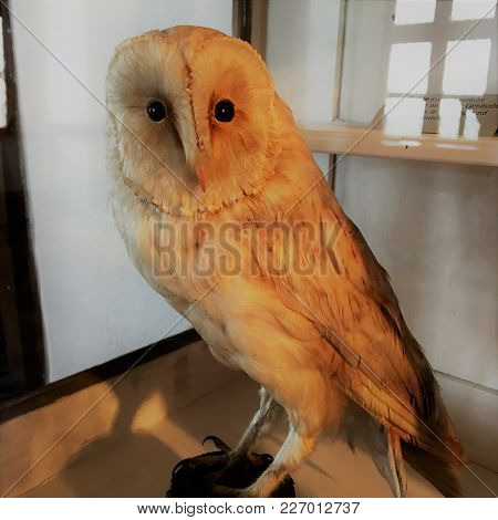 Taxidermied Owl In A Museum In South Germany