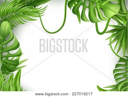 Realistic Tropical Leaves Frame Template Vector 3d Jungle Forest Exotic Monstera Banana Palm Leaf Fl