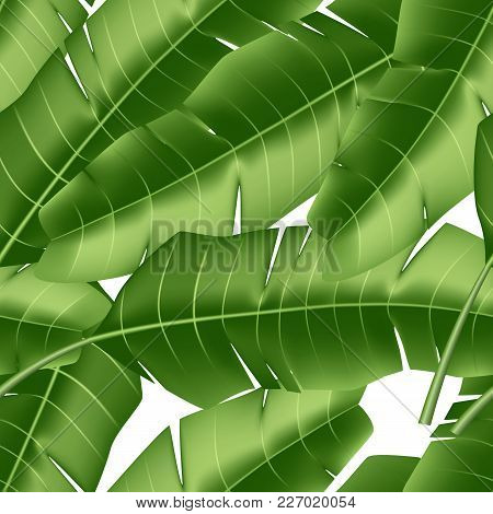 Realistic Tropical Leaves Seamless Pattern. Vector 3d Jungle Forest Exotic Banana Palm Leaf, Floral