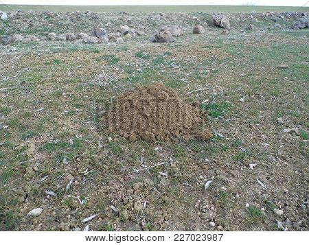 The Molehill And Mole Nests  The Mole Breaks The Soil, The Land Has Embossed, The Mole And The Soil