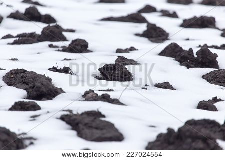 Black Soil In The Snow On The Nature .