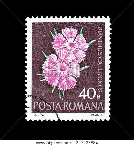 Romania - Circa 1972  Cancelled Postage Stamp Printed By Romania, That Shows Pink Flower.