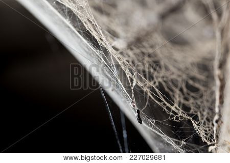 Abstract Background . Web In Nature . In The Park In Nature