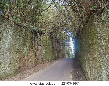 Narrow Asphalt Road Going Through Stone Tunnel In Mystery Primary Laurel Forest Laurisilva Rainfores