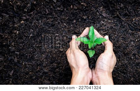 Hands Holding Plant A Tree Sapling With On Ground World Environment Day