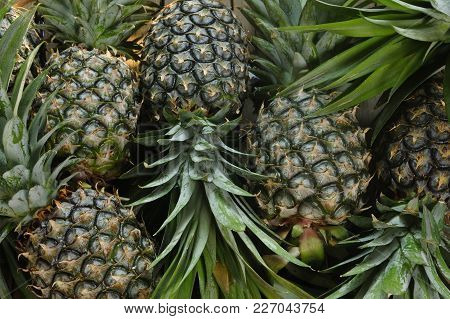 Ripe Pineapples Fruit On Wooden Table Background