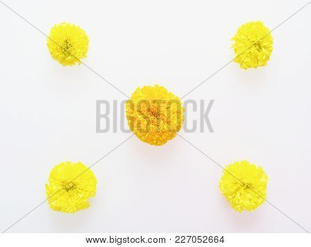 Yellow And Orange Marigold Flower Flat Laid In Star Shape Isolated On White Background With Space