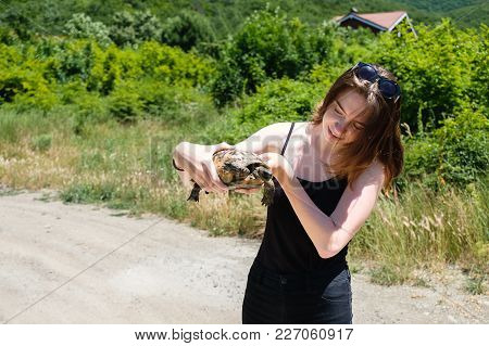 Brunette Girl In A Black T-shirt Holds A Land Turtle In Her Hands And Look On It In The Village.