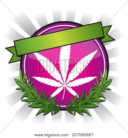 Pink Cannabis Marijuana Leaf Badge Design Vector