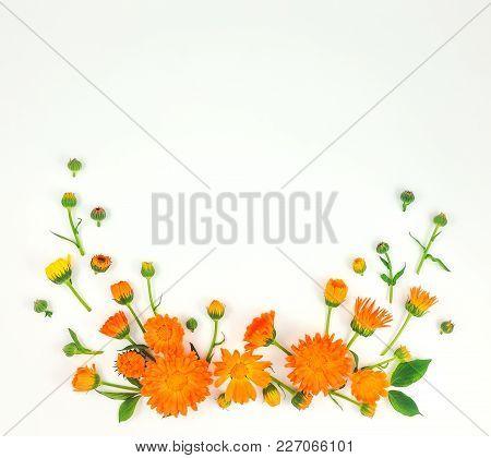 Colorful Bright Pattern Of Orange Calendula Flowers On White Background. Flat Lay