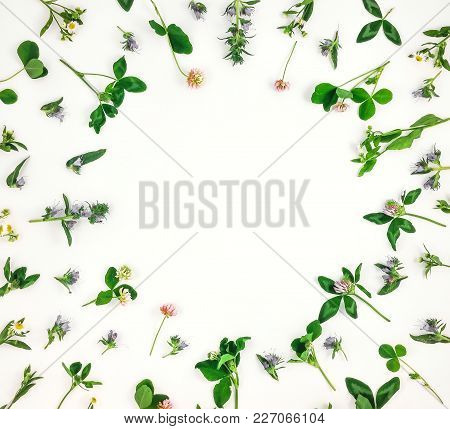 Colorful Bright Pattern Of Wild Meadow Flowers On White Background