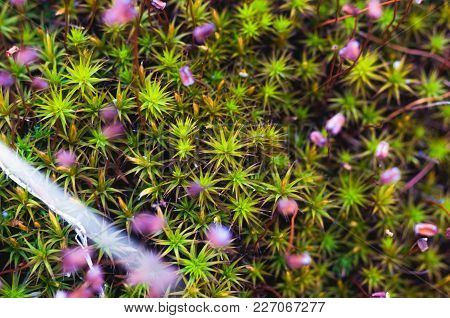 Extraordinary Grass. Grass In The Form Of A Christmas Tree. Macro Photography Of Grass. Background A