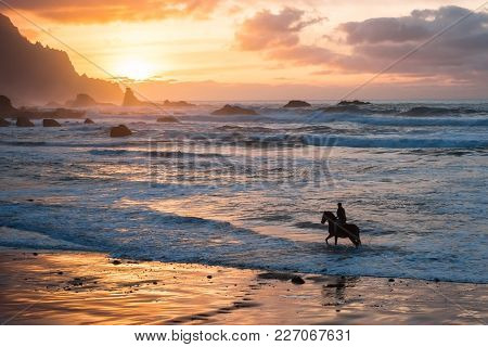 Man Horse Riding On Sunset Beach. Person With Horse At Seaside, Rear View With Beautiful Backlight.