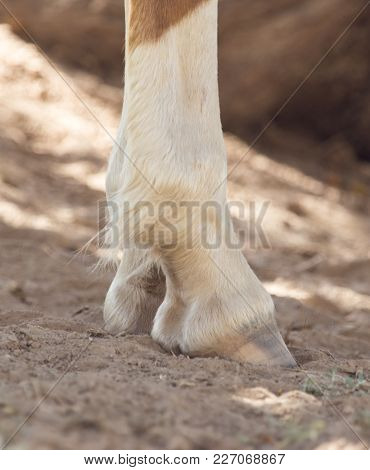 The Horse's Hooves