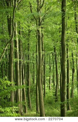 Green Forest Or Wood Scene