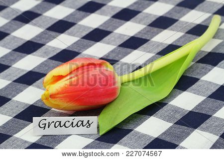 Gracias (which Means Thank You In Spanish) Card With Red And Yellow Tulip On Checkered Cloth