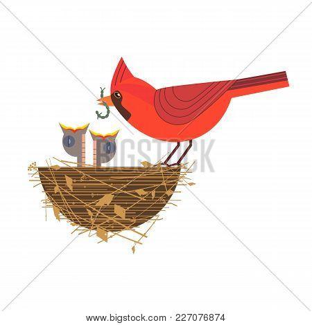 Nothern Red Cardinal Feeding Baby Birds Icon. Cute Comic Cartoon. Newborn Hungry Bird Sitting In Str