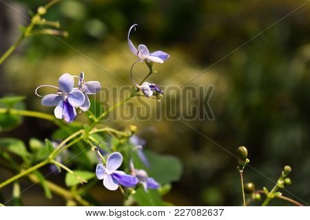 Small Purple Flowers With Blurred Green Background