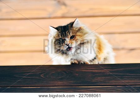 Funny Ugly Furry Cat Sitting On The Wooden Bench Waiting For The Spring