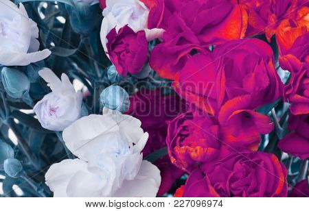 Flower bouquet background. Red and white Carnations.