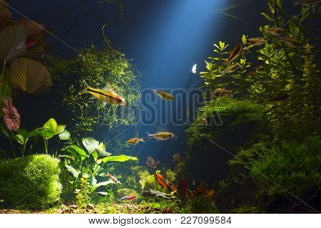 Green Planted Large Tropical Fresh Water Aquarium With Small Fishes In Low Key With Dark Blue Backgr