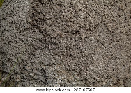 Termite Mound Texture Home Natural Park Protect
