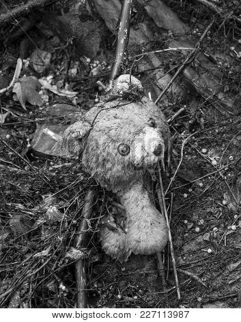 Lost Wet Teddy Bear In Stream Bed Abandoned After Flood. Black & White