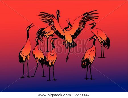 Seven dancing storks in the evening on lake poster