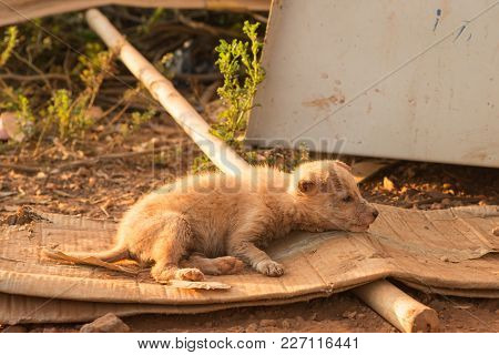 A Sick Stray Dog Lies On The Street In A Cardboard Bed