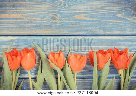 Vintage Photo, Fresh Red Tulips For Different Occasions Lying On Blue Boards, Spring Decoration, Cop