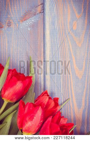 Vintage Photo, Fresh Red Tulips For Different Occasions Lying On Boards, Spring Decoration, Copy Spa