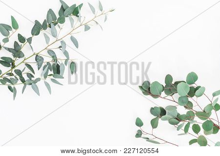 Eucalyptus Leaves On White Background. Frame Made Of Eucalyptus Branches. Flat Lay, Top View, Copy S
