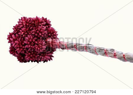 Close Up Of Red Dry Spiky Ball Flower On White Background
