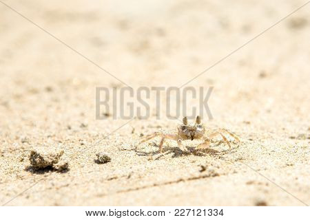 Small Crabs On The Beach In The Sand