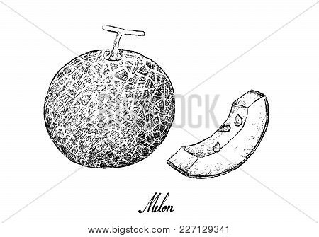 Fruit, Illustration Hand Drawn Sketch Of Melon Isolated On White Background.