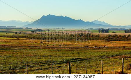 Early Morning Landscape Of Fenced Farmland With Sheep Feeding In Distance Against Backdrop Of Mounta