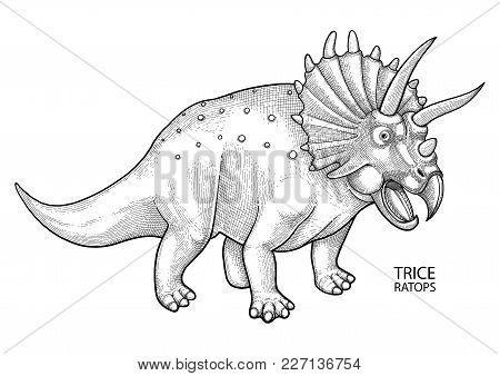 Graphic Triceratops. Vector Dinosaur Isolated On White Background. Animal Of The Prehistoric Period