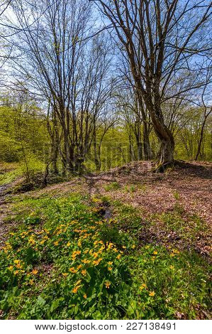 Forest In Springtime On A Sunny Day. Lovely Scenery With Yellow Flowers Near The Stream And Green Fo
