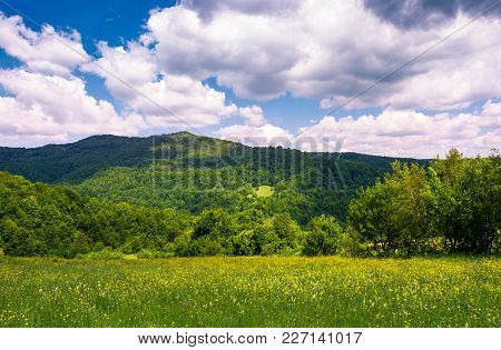 Grassy Field With Wild Herbs In Mountain. Beautiful Summer Nature Scenery